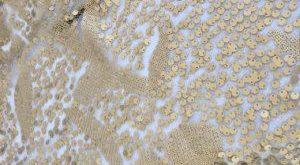 Pearl beaded lace trim, beading trim